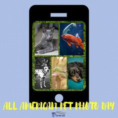 Dress them up take them to the park set them in a chair put them on a fancy pillow or whatever your imagination creates for a special photographer of your loved one! #allamericanpetphotoday #loans #mortgage #teamhomeloans #sandiego #fundit