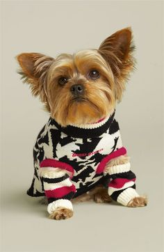 Juicy Couture 'Iconic Couture' Dog Sweater & Leg Warmers available at #Nordstrom