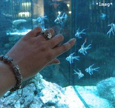 #PANDORAsummercontest Fishes and my Pandora. #PANDORAbracelet #PANDORAcharm #Myjewelry