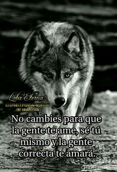 Un hombre no cambia porque una mujer lo ama... Un hombre cambia CUANDO AMA A UNA MUJER. Der Steppenwolf, Fight For Your Dreams, Wolf Life, Cheer Quotes, Quotes En Espanol, Wolf Quotes, Truth Of Life, Lone Wolf, Some Words