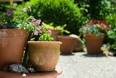 10 planter og blomster, der er nemme at dyrke i krukker i haven  ...
