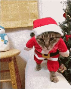 cat in a santa claus costume