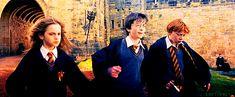 10 cosas de Harry Potter de las que no te has dado cuenta - Para Los Curiosos