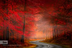 More Than Photography - Autumn road by TonyDudley