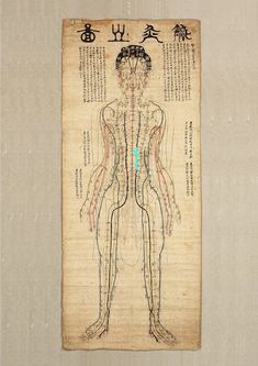 Asian Art Diagram of Acupuncture Points – akupressur punkte J Calligraphy, Acupuncture Points, Clinic Design, Anatomy Art, Print Packaging, Tantra, Book Cover Design, Chinese Art, Asian Art