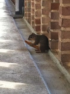 whoa squirrel!