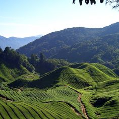 Feel like escaping Kuala Lumpur?How about a day trip to Cameron Highlands to enjoy a tea plantation visit, check out the beautiful landscapes including a stunning waterfall. Visit to a local Buddhist temple and lunch are included! All of it with your private guide by private car.