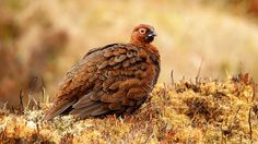 Petition · End Grouse Shooting on Ilkley Moor · Change.org