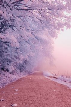 Find images and videos about beautiful, pink and nature on We Heart It - the app to get lost in what you love. Scenery Wallpaper, Aesthetic Pastel Wallpaper, Cute Wallpaper Backgrounds, Pretty Wallpapers, Aesthetic Backgrounds, Aesthetic Wallpapers, Purple Wallpaper Iphone, Beautiful Nature Wallpaper, Beautiful Landscapes