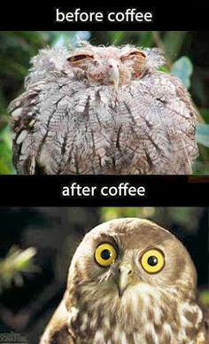 Funny animal picture with a cup of coffee :D :D :D