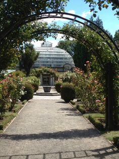 The rose garden in the Botanic Gardens Christchurch New Zealand