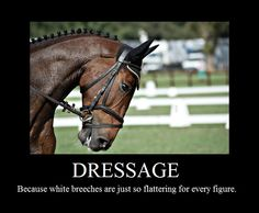 """Dressage: Because white breeches are just so flattering for every figure""."