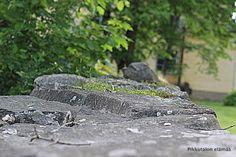 Pikkutalon elämää: Kiviaita