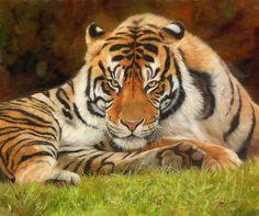 Английский художник Devid Stribbling.Дикие животные. Обсуждение на LiveInternet - Российский Сервис Онлайн-Дневников