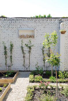 espalier ---maybe on interior of secret garden? Beautiful Soup, Beautiful Gardens, Espalier, Painted Brick Walls, Cactus Planta, Brick Garden, Edible Garden, Dream Garden, Garden Inspiration