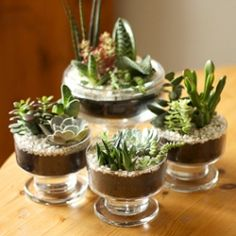 DIY instruction on how to make your own pretty succulent garden centerpiece.