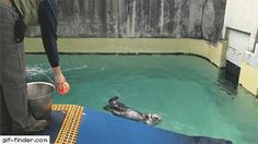 19-Year-Old Sea Otter Plays Basketball to Stay Healthy