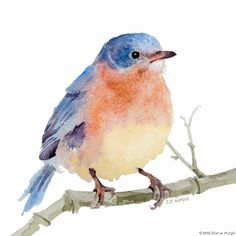 bluebird watercolor paintings | Lone Bluebird - 2009 - watercolor - 9 w x 9 h
