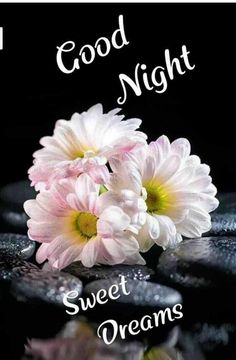 Buenas noches! Good Night Angel, Lovely Good Night, Romantic Good Night, Good Night Gif, Sweet Night, Good Night Sweet Dreams, Good Morning Picture, Good Night Quotes, Good Morning Images