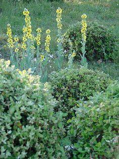 Aurélie Gueniffey I Paysagiste conceptrice de jardin I Bourgogne