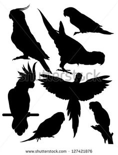 silhouettes of parrots - stock vector