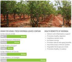 See the Amazing Health Benefits of Moringa