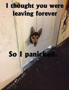16 old and new, but always hilarious 'cat and dog' memes, pick one for yourself.
