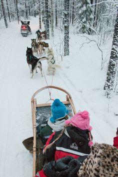 Husky Sledding In Lapland. The perfect winter family travel adventure in Rovaniemi, Finland. #familytravel #finland
