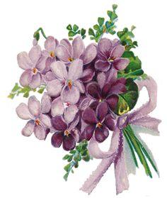 http://3.bp.blogspot.com/-1qjOrPvelb4/TxjycQCcLfI/AAAAAAAACD4/Lhy4Yw8S434/s1600/Violets+LFD.png