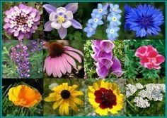 Deer Resistant Flowers, We Will See..