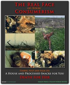 AVOID PALM OIL/and PALM OIL DERIVITIVES  in the products you buy! PLEASE.. for THEM.
