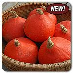 Organic Orange Summer F1 Hybrid Kabocha