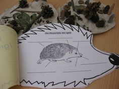 igelbuechlein - Best Education World Kindergarten Art Projects, Kindergarten Lesson Plans, Kindergarten Activities, Science Activities, Science Experiments Kids, Science For Kids, Thing 1, Stem Projects, Design Blog