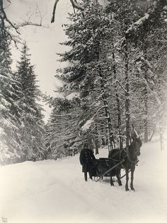 Uggleviken Forest, Stockholm, Sweden  1880s