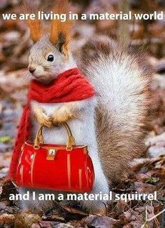 Little Red Riding Squirrel - pets & animals Animals And Pets, Baby Animals, Funny Animals, Cute Animals, Animal Fun, Animal Pictures, Funny Pictures, Funny Images, Amazing Pictures