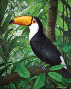 contrastes de la selva Tropical Art, Tropical Birds, Exotic Birds, Colorful Birds, Tropical Paintings, Bird Drawings, Animal Drawings, Bird Patterns, Bird Pictures