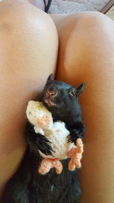 Honey the squirrel loves her little duckie.  ❤ ❤ ❤