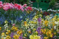 Image result for monet's garden