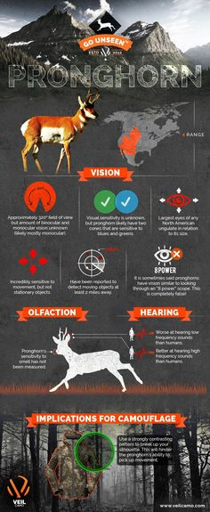 Pronghorn are Incredibly sensitive to movement, and high-frequency sounds than humans. Here are some Tips and Tricks to hunt Pronghorn - Infographic Hunting Tips, Archery Hunting, Deer Hunting, Hunting Stuff, Coyote Hunting, Pheasant Hunting, Antelope Hunting, Turkey Calling, Bowfishing