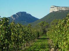 Le Languedoc dispose d'un vaste vignoble produisant une grande diversité de vins. Le département de lHérault, situé au cœur de cette région viticole, peut se prévaloir de posséder le plus vieux vignoble de France ! Vins de coteaux ou de bord de mer, ses crus enchanteront vos papilles.