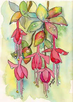 Fushia by jjlcooterpie, via Flickr. Love the mixture of pen and wash.