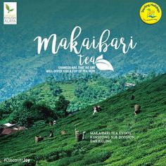 Did you know that just a kg of Makaibari tea could cost you a whopping Rs. 1.12 lakh? Don't forget to check out the Makaibari tea estate in the Darjeeling district. How many of you would want to taste this amazing tea? Explore more on our website. #DiscoverJoy
