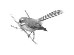 nz fantail sketch - Google Search Butterfly Sketch, Nz Art, Kiwiana, Graphite Drawings, Sleeve Tattoos, Cool Tattoos, Giclee Print, Art Projects, Cute Animals