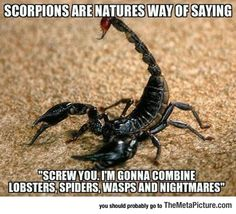 Truth About Scorpions