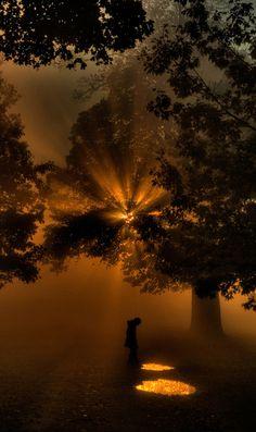 Sunrise through the Trees by Robert Jones | My Photo | Scoop.it