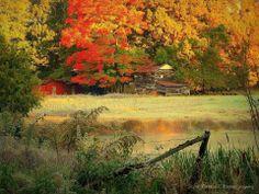 "Shared on facebook...Scott Garlock Photography ""autumn frost"""