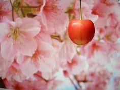 National Cherry Blossom Festival, USA – Extreme Spring Tourism & Anniversary Trip - Homemade Ideas (10)