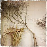 Natural wall decor