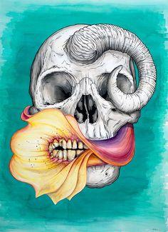SKULLS - Jeff-proctor-skull-art-2_large