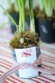 Great gift idea, paperwhites! Cheap!